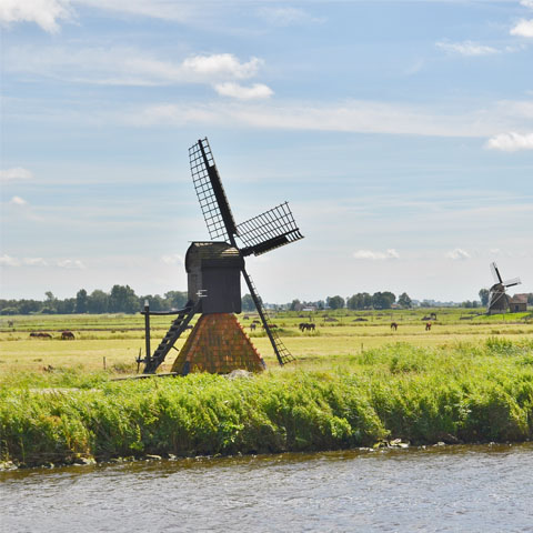 Natuur in Friesland